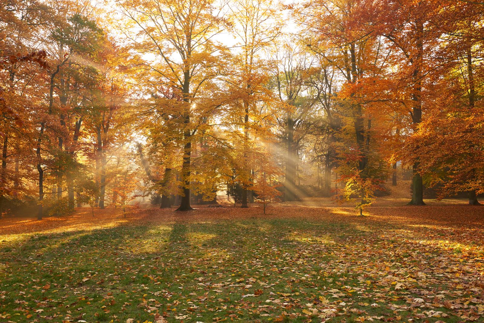 mlha stromovka
